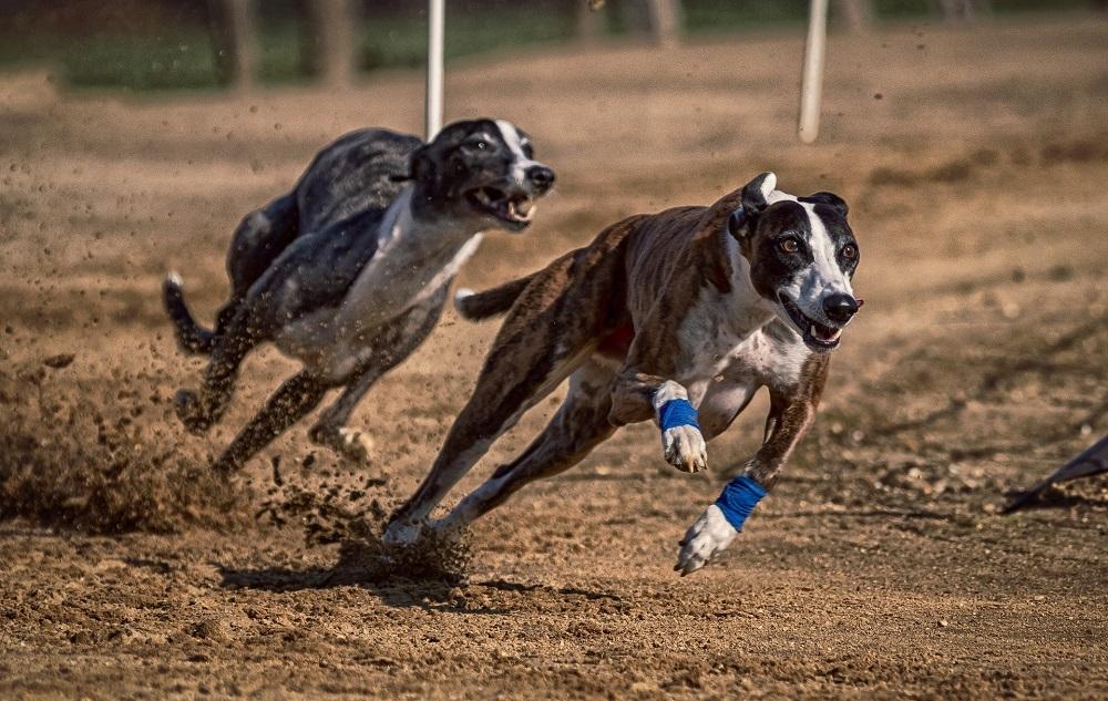 Cani sportivi