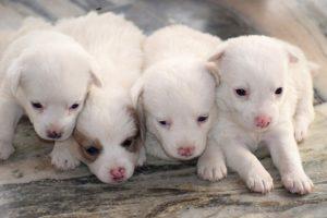 Cibo per cuccioli Nutri-Med