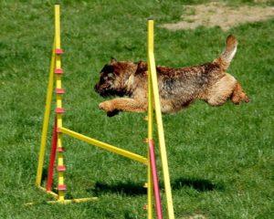 Addestramento cani Nutri-Med