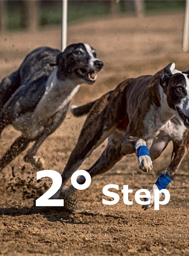 Preparazione atletica cani sportivi